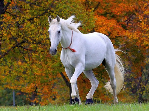 20 Exquisite Photos of Different Breeds of Horses